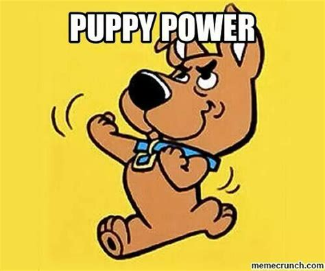 puppy power 1000 images about on coyotes and barbera