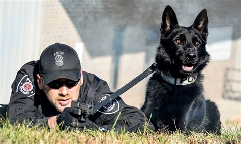 how are k9 dogs trained k9 trainer school