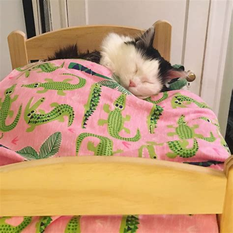 Sleeps Bed by Cat Rescued From Terrible Conditions Now Sleeps In