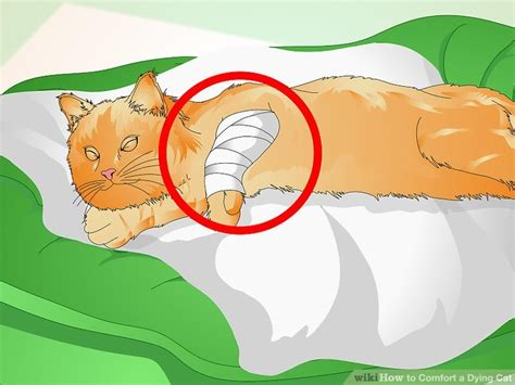 how to comfort a cat how to comfort a dying cat 13 steps with pictures wikihow