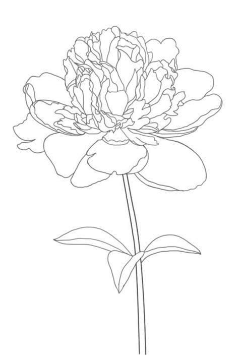 peony coloring pages    print