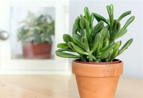 easy houseplants top 10 easy houseplants new england today