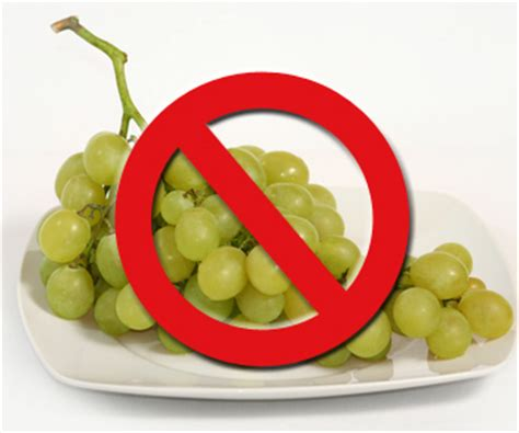 are grapes poisonous to dogs pet poisons grapes and raisins