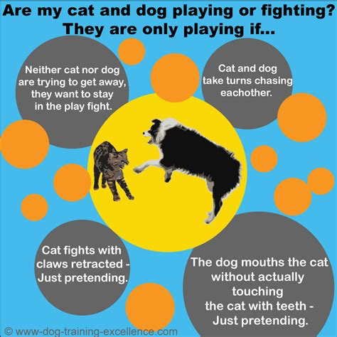 7 Ways To Stop A Cat Fight by My Cat And Fight How Do I Stop It