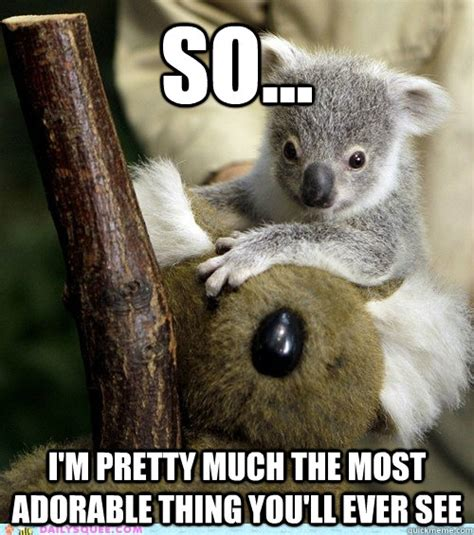 Koala Bear Meme - i know im cute koala memes quickmeme