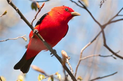 red bird red bird show me the way