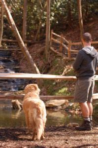 Pet Friendly Cabins Smokey Mountains by Pet Friendly Smoky Mountain Cabins