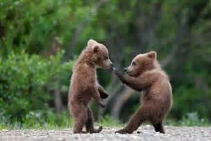 baby bear type animals