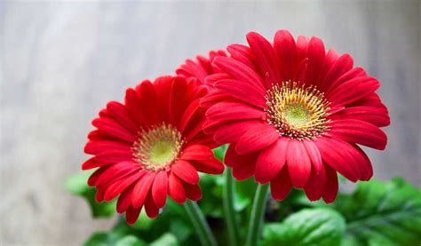 beautiful flower pictures 133 beautiful pictures of flower images wallpaper photos