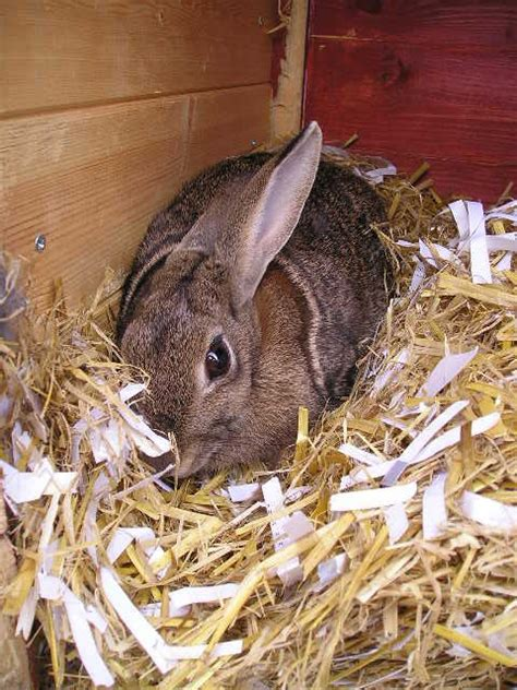 bedding for rabbits 62 best images about rabbit hutches on pinterest rabbit