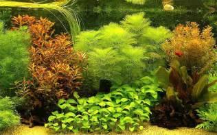 Best Plants For Tropical Aquarium - 50 best aquarium backgrounds to download amp print free amp premium templates