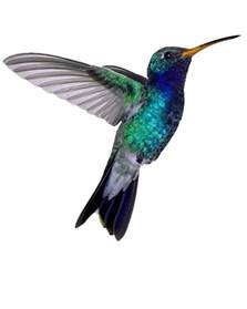 tattoos of humming bird humming bird tattoo pictures