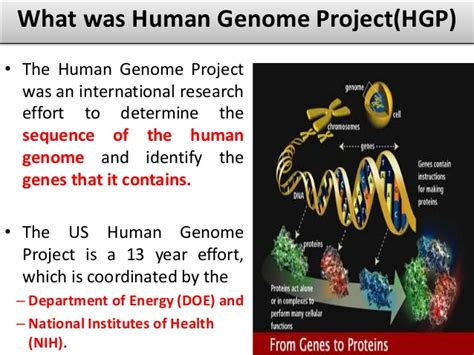 section 13 2 the human genome project human genome project