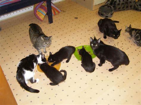 kein katzenfutter im haus hilfe und tauschaktion f 252 r die stpfoten katzen forum