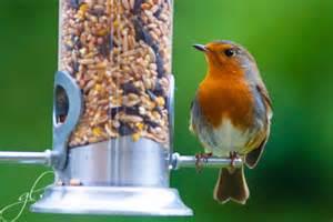 robin at the bird feeder garylawton com
