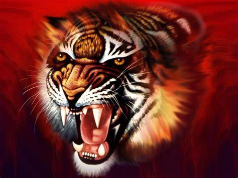 whatsapp wallpaper tiger tiger 3d hd desktop wallpapers 6516 amazing wallpaperz