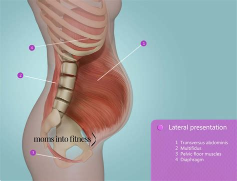 Pelvic Floor During Pregnancy by Diastasis Recti Do S Don Ts During Pregnancy And After