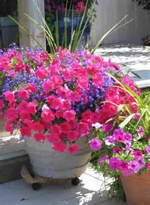 container gardening flower pots ideas home inspirations