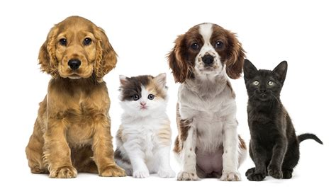 puppies and kittens natick ma puppy kitten care wellesley natick veterinary hospital