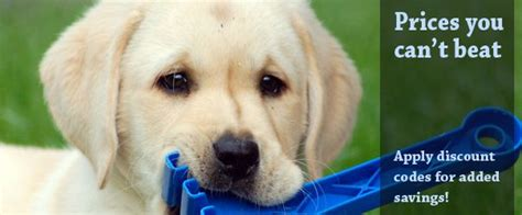 puppy supplies cheap best 25 pet supplies ideas that you will like on supplies