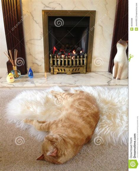 rug in front of fireplace cat in front of a stock photo image 48499388