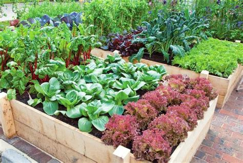 10 secrets to producing the best vegetable patch ever serenity secret garden