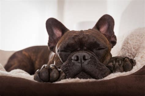 What To Do If Your Dog Pees In His Sleep Cuteness Com