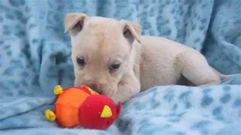 puppies for adoption in ct puppies for adoption in va dc md nj pa ny ct maine mass nh and ri