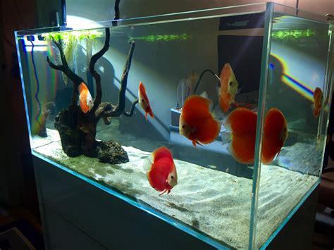 vasca discus discus only minimalist tank 224062 fish
