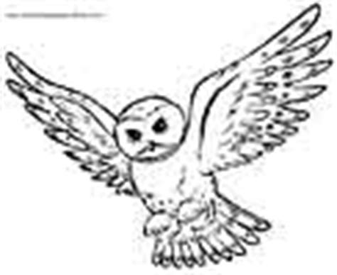 barred owl coloring page owls coloring pages
