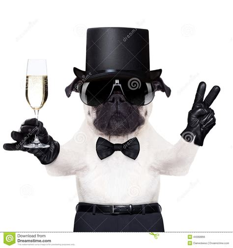 peace puppies cool peace stock photo image of joke luxury 44068866