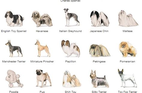 small puppy names names of small breed dogs pictures to pin on pinsdaddy