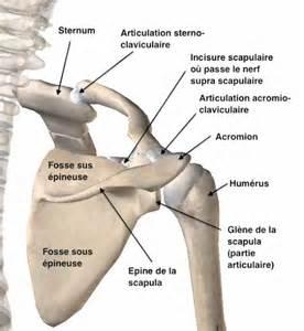 les fractures de la clavicule par l unit 233 de chirurgie de
