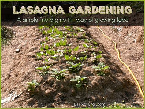 lasagna gardening in containers lasagna gardening what it is and how to set it up
