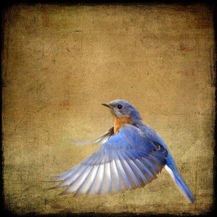 if your a bird im a bird tattoo best 25 bird wings ideas on bird flying