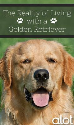 1000 golden retriever quotes on losing a