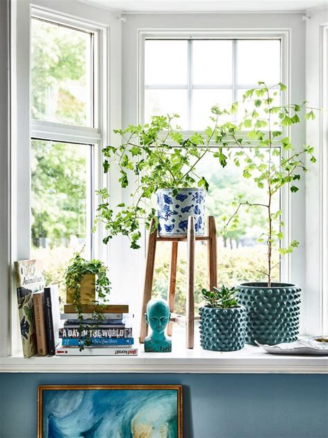 Window Sill Plants Decor 14 Places To Use Indoor Air Purifying Plants Decorated