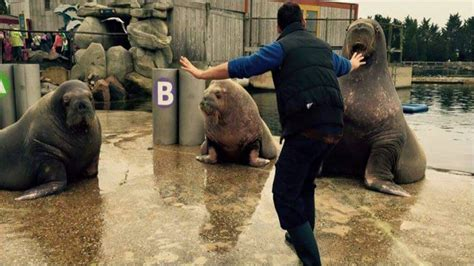 zookeepers are recreating chris pratt s moves in jurassic