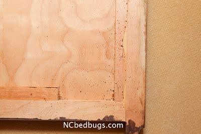 bed bugs headboard dr bed bug free education material on bed bugs cimex