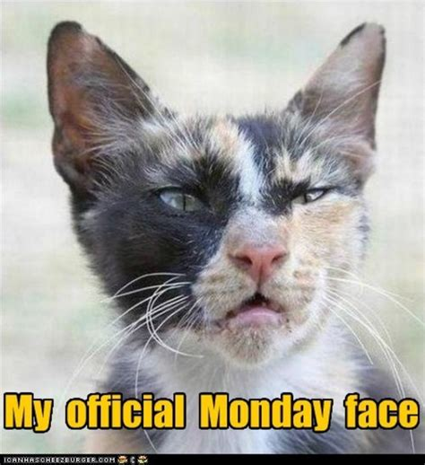 Monday Cat Meme - 10 funny monday morning faces