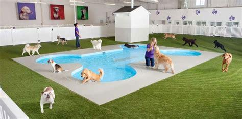 layout de hotel para cachorro hotel para cachorro como funciona melhoramigo dog