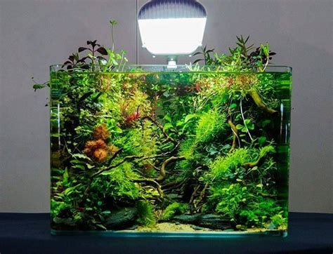 design aquarium nano 50 aquascape aquarium design ideas aquariums fish tanks