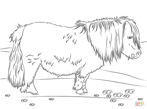Shetland Pony Coloring Pages | cute shetland pony coloring page free printable coloring