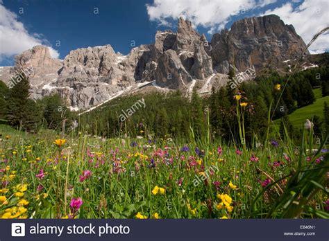 di sella summer wildflower meadow with the sella gruppo di