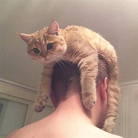 Cat Hats by Cat Hats