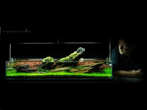 aquascape reddit james findley of the green machine crimson sky aquascape