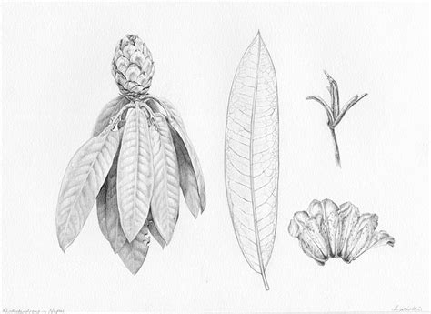 libro botanical drawing using graphite best 25 graphite drawings ideas on realistic drawings pencil drawings and scary