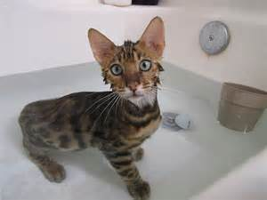 kittens in bathtub cat allergies how to treat cats with allergies mnn