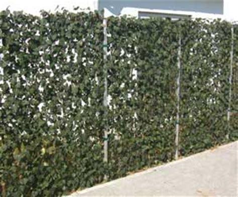 efeu zaun garten und landschaftsbau bernd sonnenberg