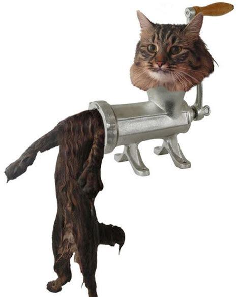 Wet Cat Meme - this new wet cat meme is dominating the internet 40 pics